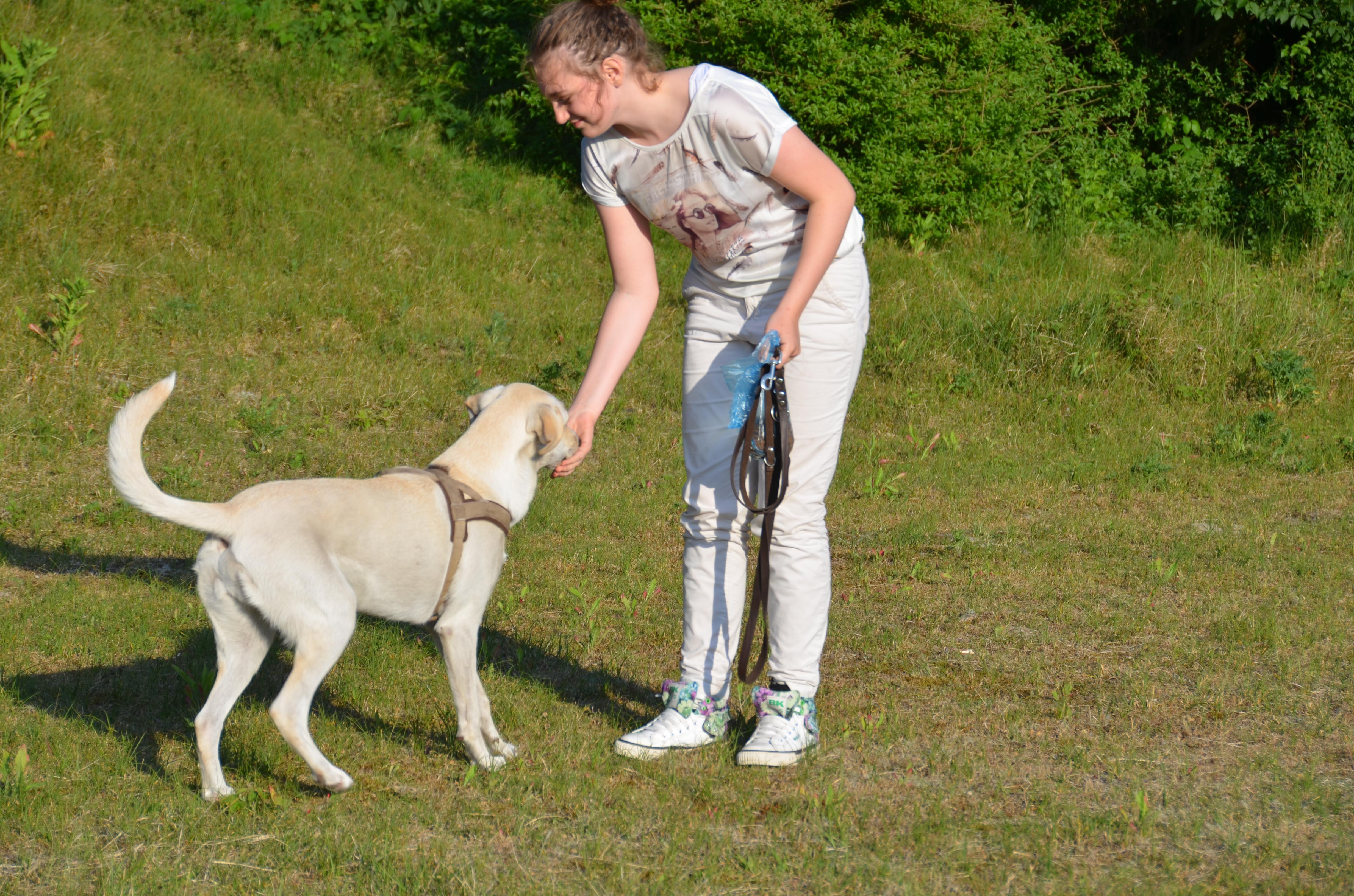 Hondenschool Den Haag cursus hierkomen