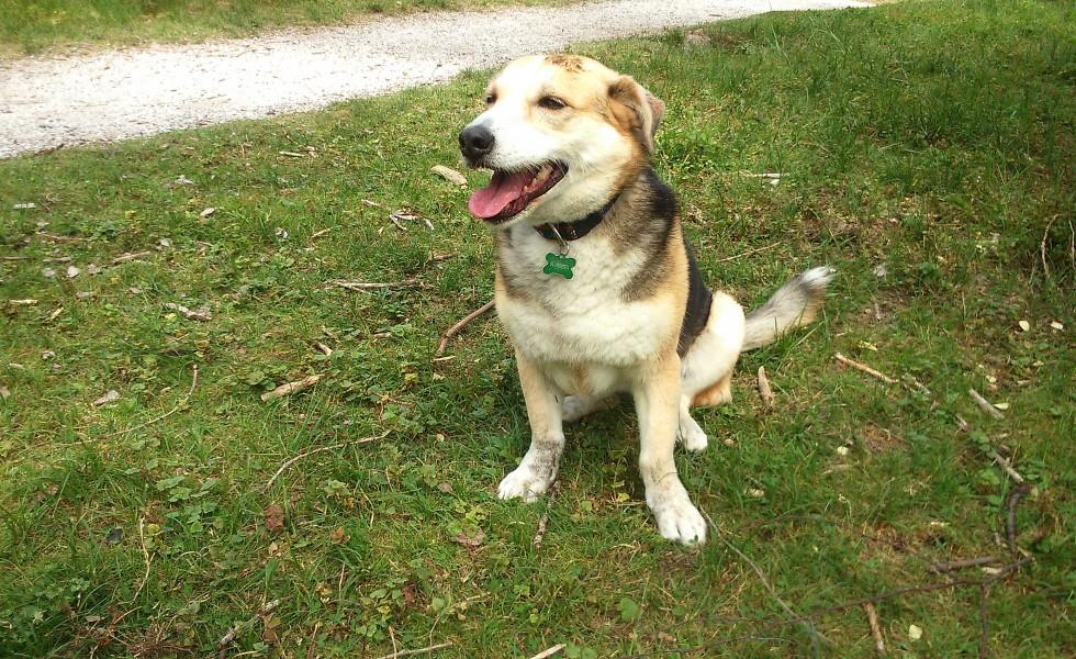 Stella puk hondenservice uitlaatservice Den Haag